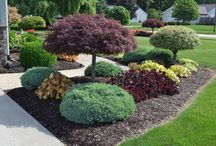 Landscaping in shady areas