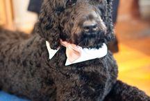 louis doodle / photos of our furry friend louis