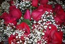 Flowers / by Susan Hilliard