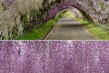 The Color Purple / by Michelle Peterfesso