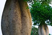 Fák-Tree