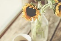 Sunflowers ✌️