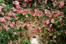 Garden / by Annie Packman