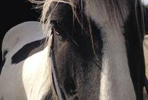 Mijn eigen pony fotos alle maal zelf gemaakt
