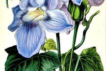 Botánical prints