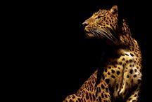 Amazing Animals / by blurppy