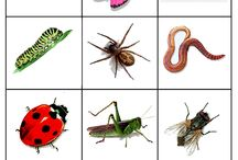Hmyz na louce