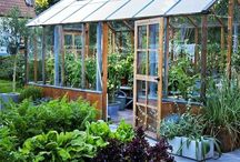 Greenhouse gardening & ideas.