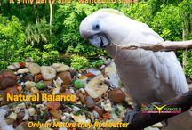 papegaaien / vogels en voeding