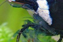 Invertebrates / Aquatic invertebrates