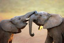 Elefantes / Nuestro símbolo