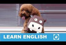 Angol szókincs - Beszélő szókártyák