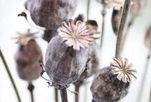 Fleurs. les thématiques et originales