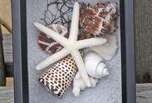 Deniz kabuğundan çalışmalar
