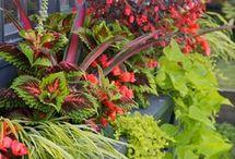 Garden desing