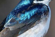 Kuşlar...