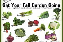 Fall Gardening / by Alisa Johnson