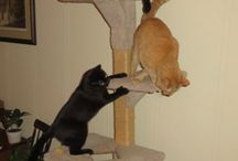 Playtime / Cats playing.