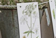 Botanica e natura / Ispirazioni e idee a tema piante...