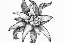 flori de colt