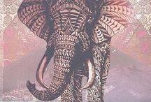 elephanr