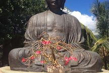Universal Spirit / I am all about Learning to Live Mindfully through meditation, reiki and Australian Bush Flower Essences.