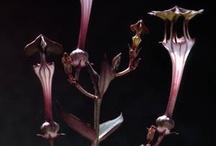 Plants - sukulents