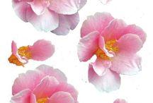 3D-Blüten