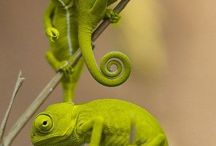 Reptiles and habitats
