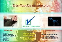 Clinica Veterinaria Madrid Centro Lider