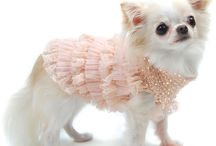 Doggy couture