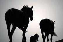 Horse Diys