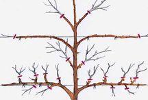 stříhání stromků