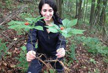 Edible Plants of North Carolina