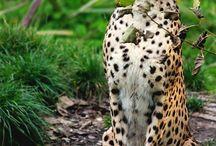 Divoká zvířata
