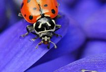 Ladybugs / by Ashley Wornell