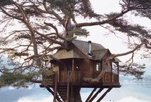 Tree Fun Houses / Tree houses  / by Paula Gross