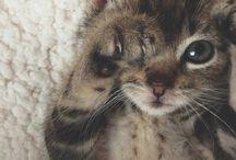 Коты,кошки,котята