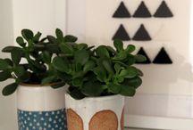Gardens - Indoor Pots