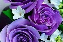 rosas de cor lilaz.