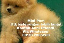 Jual Mini Pom di Bandung