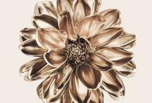 Flower by F.Treptow