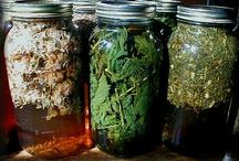 Syrups, Extracts & Infusions