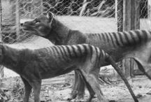 Animals - extinct / In honor of those species which did not make it because of humans negligence and greed!