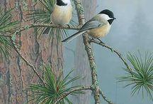 Kuşcuklar
