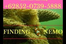 Pulau Abang Snorkelling, Contact : 085207395888