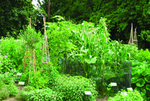 Productive gardens to visit / Stuck for inspiration? Visit a beautiful veg bed in the Bristol area.