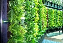 Vertical garden.... ideas
