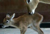 Animals....I love....ⓚ / by ⓚrisstyn...💕