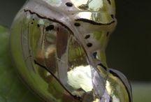 vlinders/ mariposa